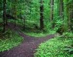 path actors take